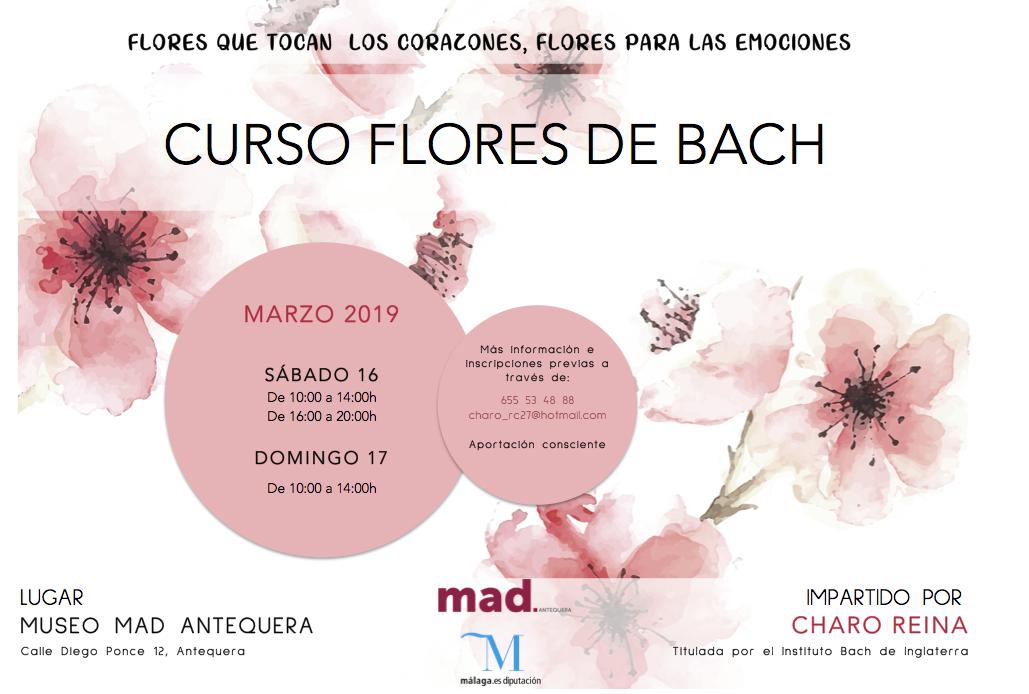 curso flores bach